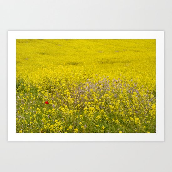 One lonely poppy in the yellow field Art Print