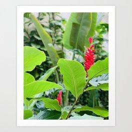 Brazilian Botanicals Art Print