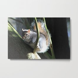 Squirrel In The Tree Metal Print