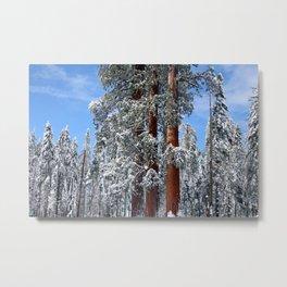 majestic redwoods Metal Print