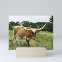 Brown and White Longhorn Standing in Pasture Mini Art Print