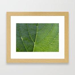 Veins Framed Art Print