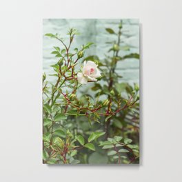 White rose bud on the bush Metal Print