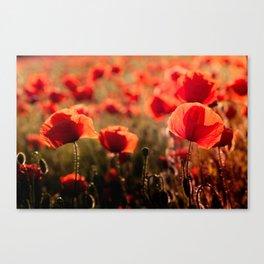 Fiery poppy field - Red Poppies Flowers Canvas Print