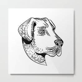 Anatolian Shepherd Dog Etching Black and White Metal Print