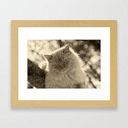Sunlit Cat in Sepia Framed Art Print