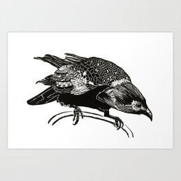 Watching crow Art Print
