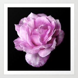 Eleanor's Rose Art Print