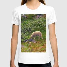 Little Lamb T-shirt
