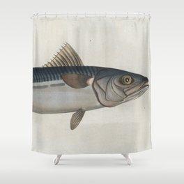 Vintage Illustration of an Atlantic Mackerel (1785) Shower Curtain