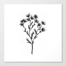 Wild Carrot Wildflower Canvas Print