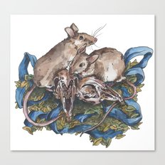 Mice and skulls Canvas Print
