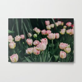 Blush Tulips By The Dozen Metal Print