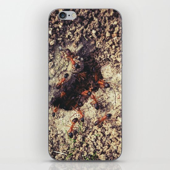 Ants iPhone & iPod Skin
