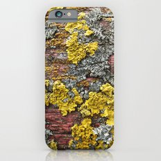 Colorful bark Slim Case iPhone 6s