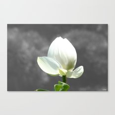 Pure Flower Canvas Print