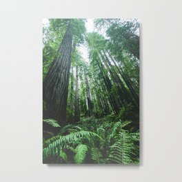 Redwood National Park- Pacific Northwest Nature Photography Metal Print