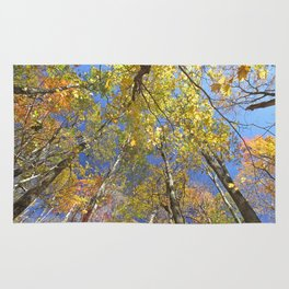 Brightly colored Autumn tree tops Rug