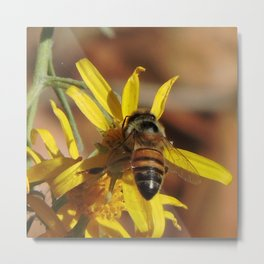 Desert Sunflower Pollen Picker Metal Print