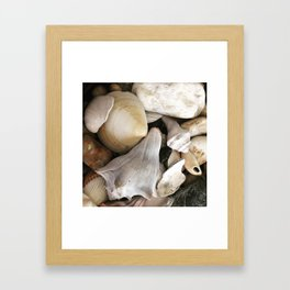Coquillages Framed Art Print