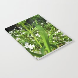 Spring Beauty 13 Notebook