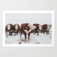 cows Art Prints featuring Cows  by Haley Lauren