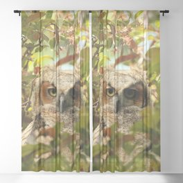 Baby owl in spring blossoms Sheer Curtain