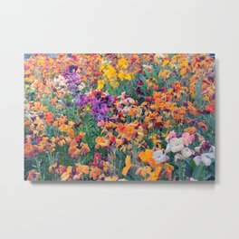 COLOUR POP // SPRING FLOWERS  Metal Print