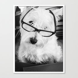 Really? Cute Westie Dog Wearing Glasses Canvas Print