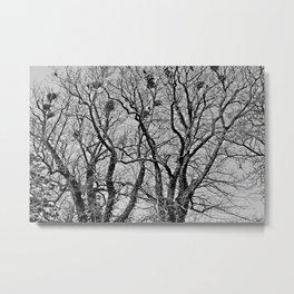 Birds nests Metal Print