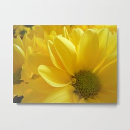 Sunshine Daisies, Butter Mellow Metal Print