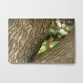Squirrel in a Tree Photography Print Metal Print