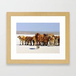 Pony leading the mob home Framed Art Print