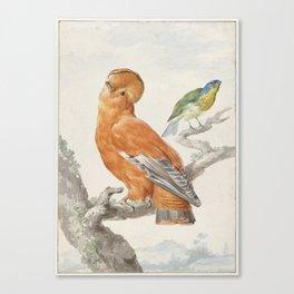 Two Exotic Birds - Vintage Tropical Decor Canvas Print