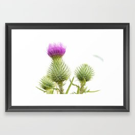 Nature Photography Framed Art Print