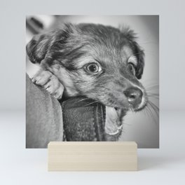 Puppy biting camera strap Mini Art Print