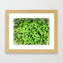 Moku Hanga Style Ferns  Framed Art Print