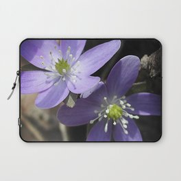 Woodland hepatica, Anemone acutiloba - a sure sign of spring Laptop Sleeve