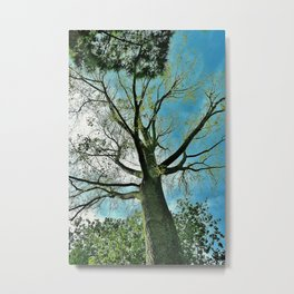 Tree Perspecive Metal Print