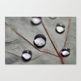 Autumn Leaf Water Droplets Canvas Print