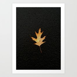 Oak Leaf on Black Background Art Print