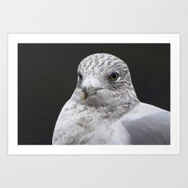 Seagull Winter close-up Art Print