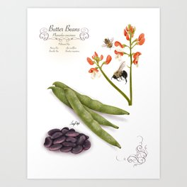 Butter Beans and Pollinators Art Print