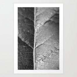 Macro flower 3 Art Print
