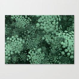 Green Laceflower Canvas Print