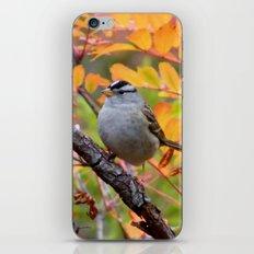 Bird in Autumn Foliage iPhone & iPod Skin