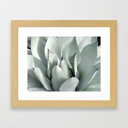 Ornamental Agave Framed Art Print