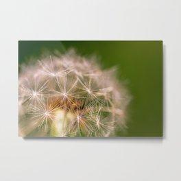 Snowglobe - Macro Photograph of Dandelion Metal Print