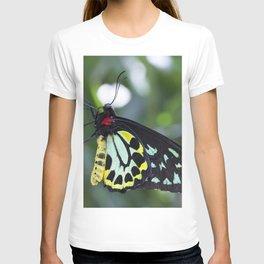 Cairns Birdwing Butterfly T-shirt