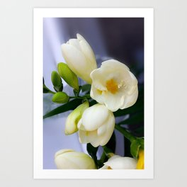 Shades of yellow on white freesia Art Print
